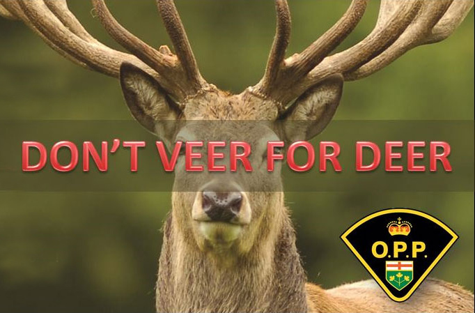 Don't Veer for Deer